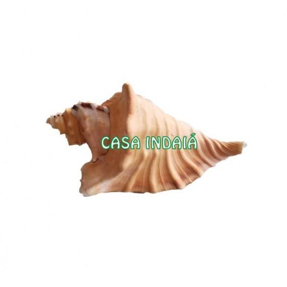 Concha Camaleão