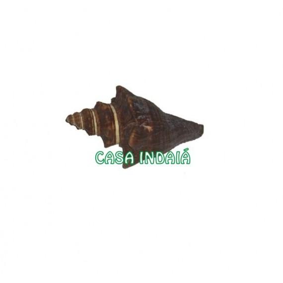 Concha Caracol Pugilina