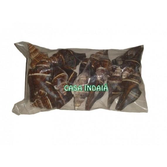 Concha Pugilina Morio Pacote (150 gramas)