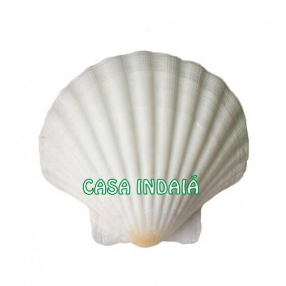 Concha Shell